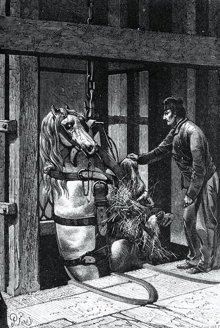 Pit Ponies, Pit Horses, pit pony history, miner Ceri Thompson, Canadian Coal Mining history, Sable Island, underground stables, Underground haulage, Coal Mining Canada